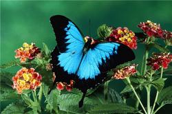 Post Thumbnail of Заповедник бабочек