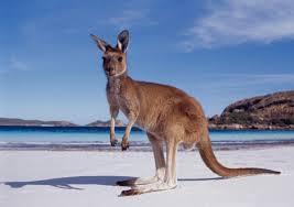 Австралия и ее опасные животные